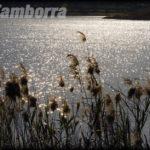 Tamborra_Massimo_2_pace